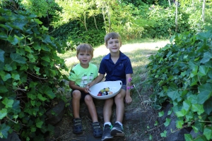 Daily fruit picking - some for snacking and for learning!