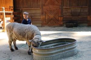 Samuel loved brushing this sheep!