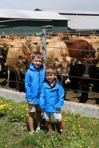 Boys so excited to see hundreds of cows!