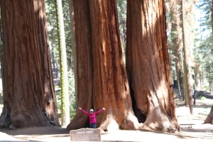 Relative size for how huge the sequoia trees are in the park