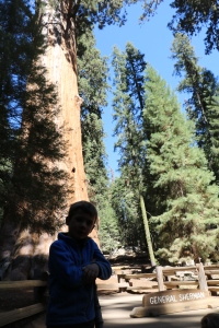 Austin in front of the largest tree in the world, General Shearman